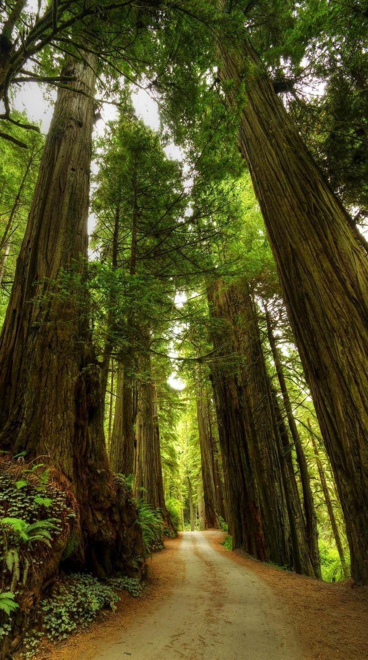Schauen Sie sich die majestätischsten Bäume der …
