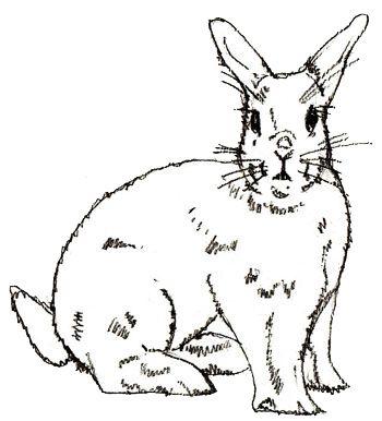 Как нарисовать кролика, шаг 5
