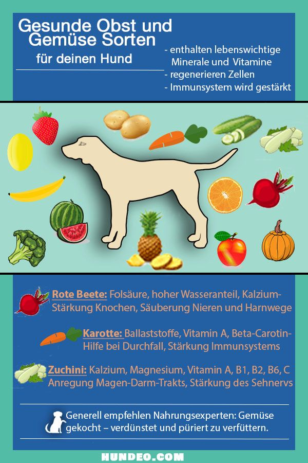 Healthy fruits and vegetables varieties for your dog (infographic)