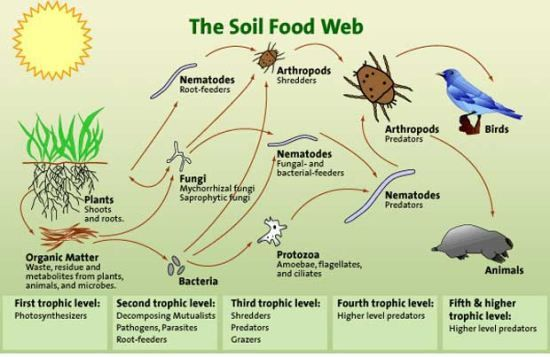 17 best images about life cycle on pinterest anchor for Soil life cycle