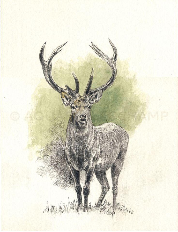Les 80 meilleures images du tableau art animalier cerf ciervo deer sur pinterest animaux - Dessin tete de cerf ...