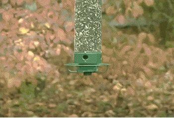 ardilla juega con alimentador de aves