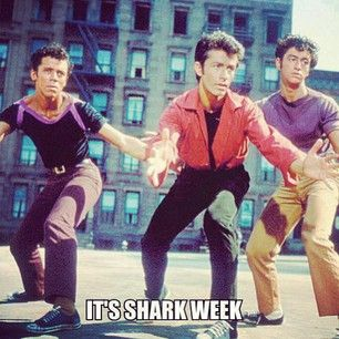The other Shark Week. Nothing better than performing West Side Story during Shark Week.