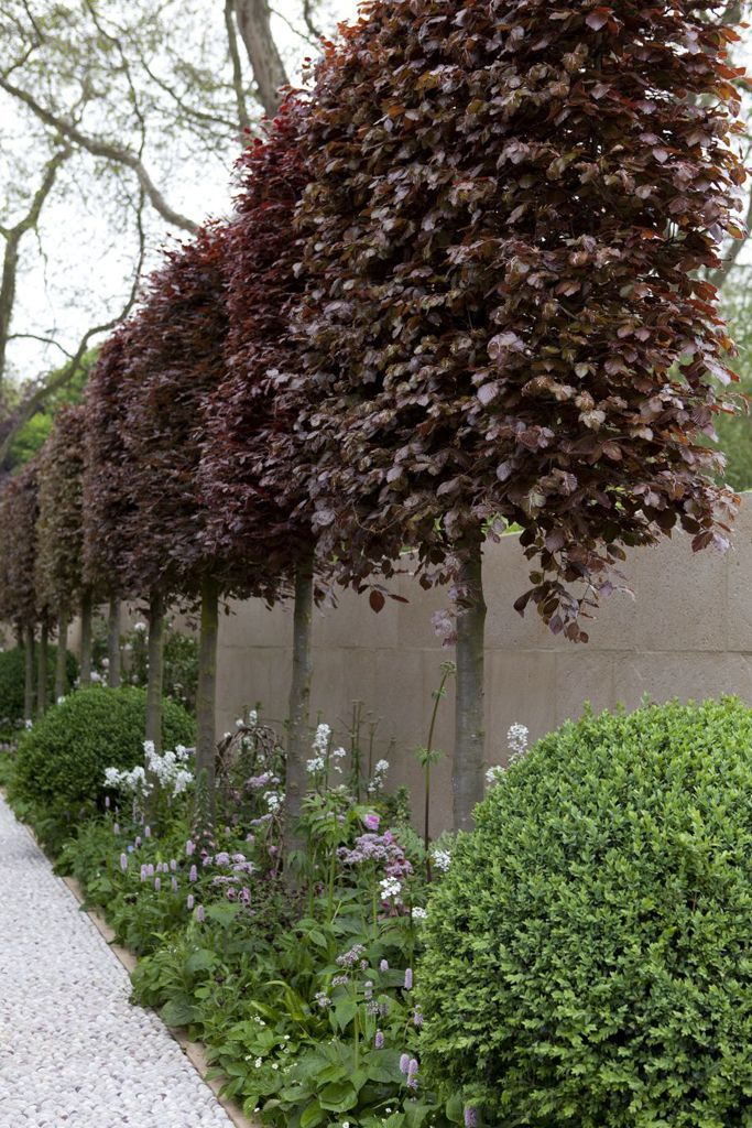 #Beautifully_Trimmed Tree Hedge - This hedge of Copper Beech trees is the perfect example of how a little annual pruning attention can shape trees to fit any landscape criteria. Consider a #tree_hedge or screen to add privacy to your yard.