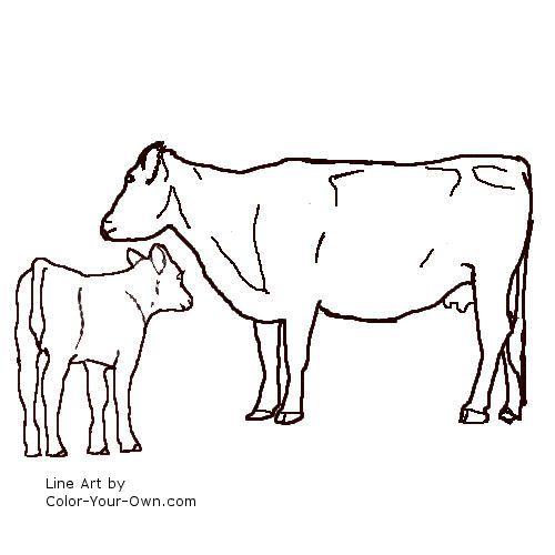 Angus cow and calf line art Teaching