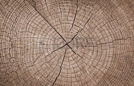 32890706-seção-transversal-do-tronco-de-árvore-que-mostra-anéis-de-crescimento,-textura-de-fundo.jpg (450×288)