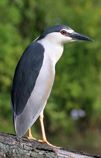 ptaki polski - Szukaj w Google