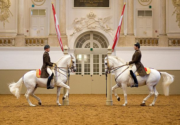 Lipizzaner stallions enchant the public with classical school jumps at the Spanish Riding School in Vienna.