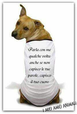 """i cani sono i migliori amici che si possona desiderare, sono fedeli e altruisti. Non esistono cani """"cattivi"""", ne esistono di più difficili da capire e da comprendere, quelli che noi riteniamo """"cattivi"""" hanno solo più bisogno del nostro amore e del nostri sostegno e i nostri sforzi per loro non andranno sprecati. NON ABBANDONATELI, LORO NON LO FAREBBERO MAI..."""