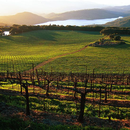 Chappellet  This is the oldest winery on Pritchard Hill, a stunning, high-elevation area known for producing some of Napa's best Cabs. Chapp...