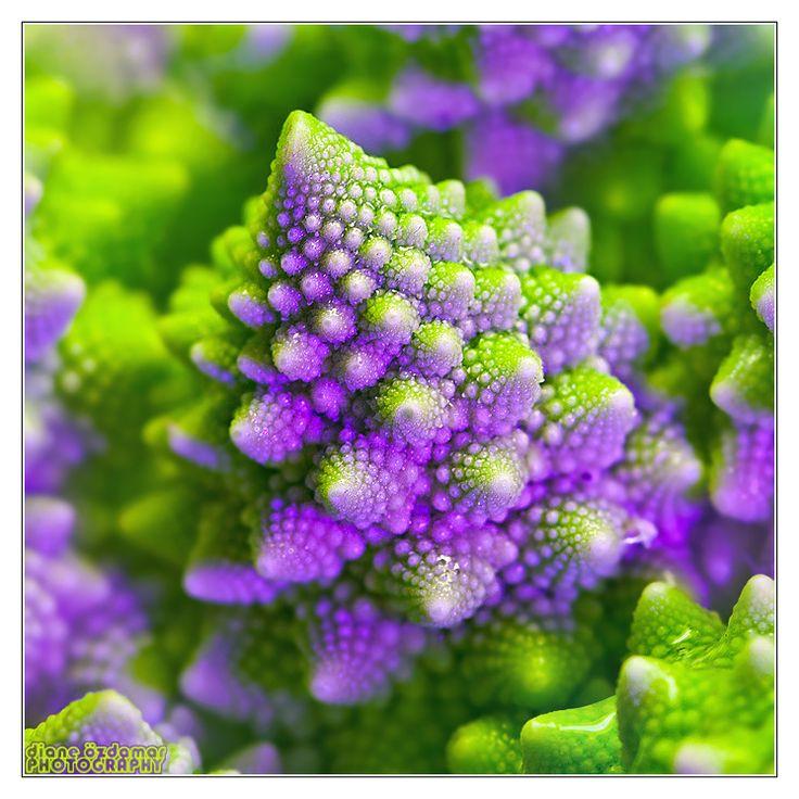 Natural fractals of Romanesco broccoli by © *DianePhotos, via deviantART.com