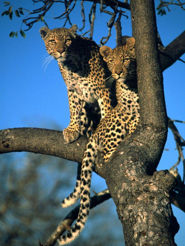 Animal magic in Tanzania! Grumeti Serengeti Tented Camp
