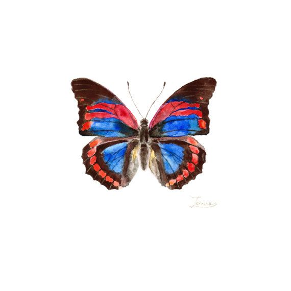 Watercolor red blue butterfly Prepona praeneste. JPG downable and printable. Realistic hand painting high resolution digital file by ZorrinaArt
