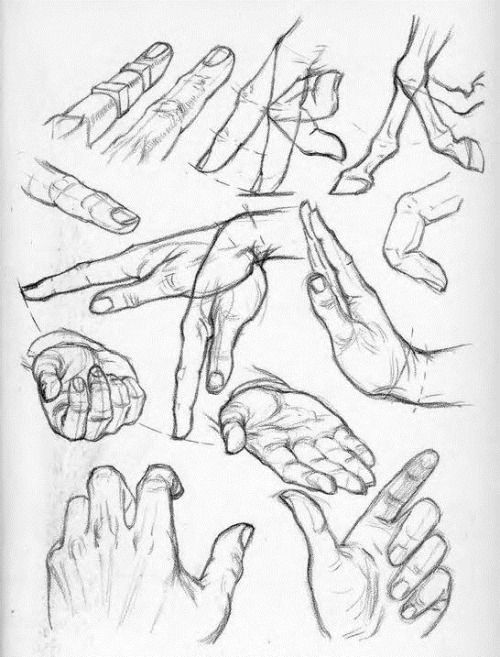 anatoref:  Hands by Andrew Loomis