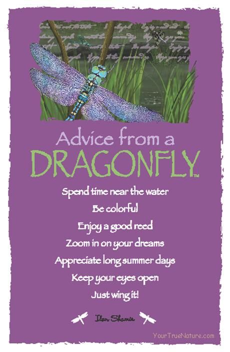 Spirit Totem Animals: #Advice from a #Dragonfly.