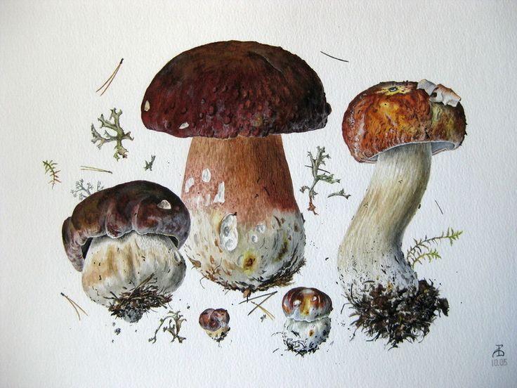 грибы восхитительные — plantarum — Сохраненная запись в кэше | Ljrate.ru