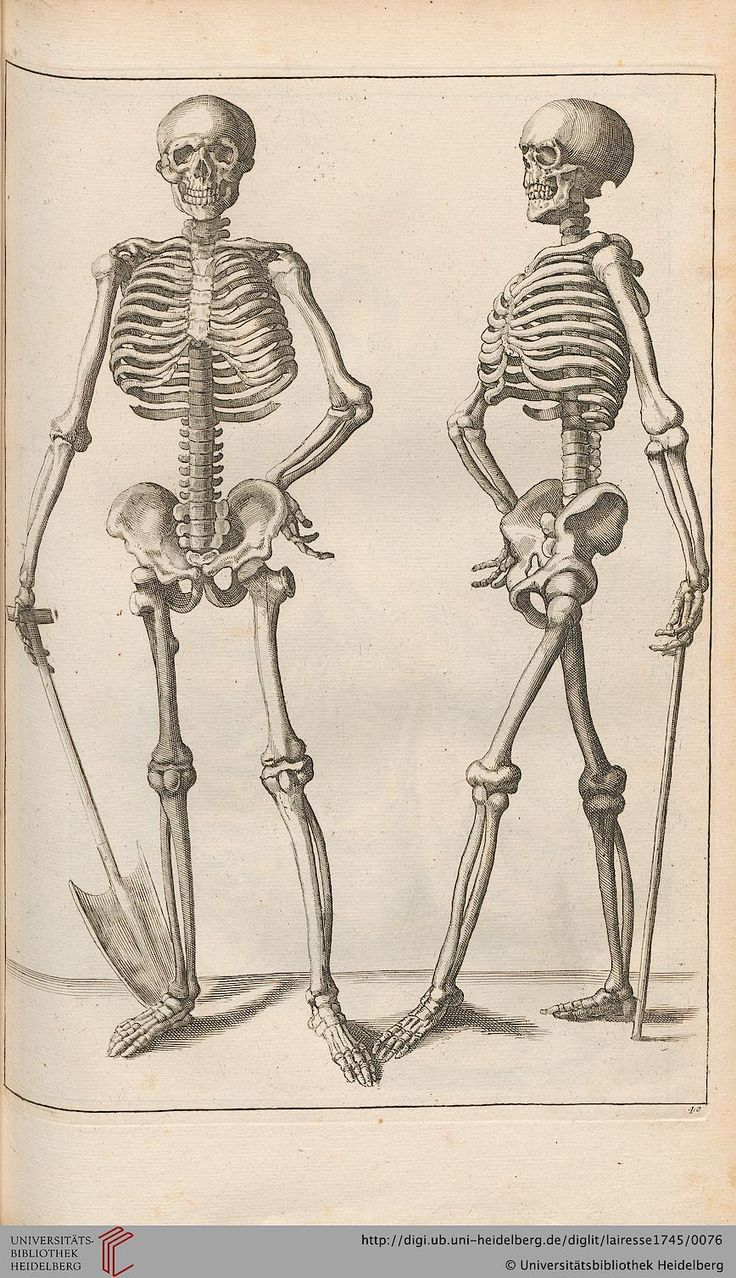"""Gérard de Lairesse, Skeletons from """"New School in the Art of Drawing"""", 1745. Leipzig."""