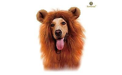 Lion mane costume with ears for dog and cat adorable Halloween dress up party