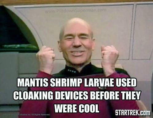 403683784e0372ae7117b43ed5fdd2a3 mantis shrimp science memes 106 best creation science \