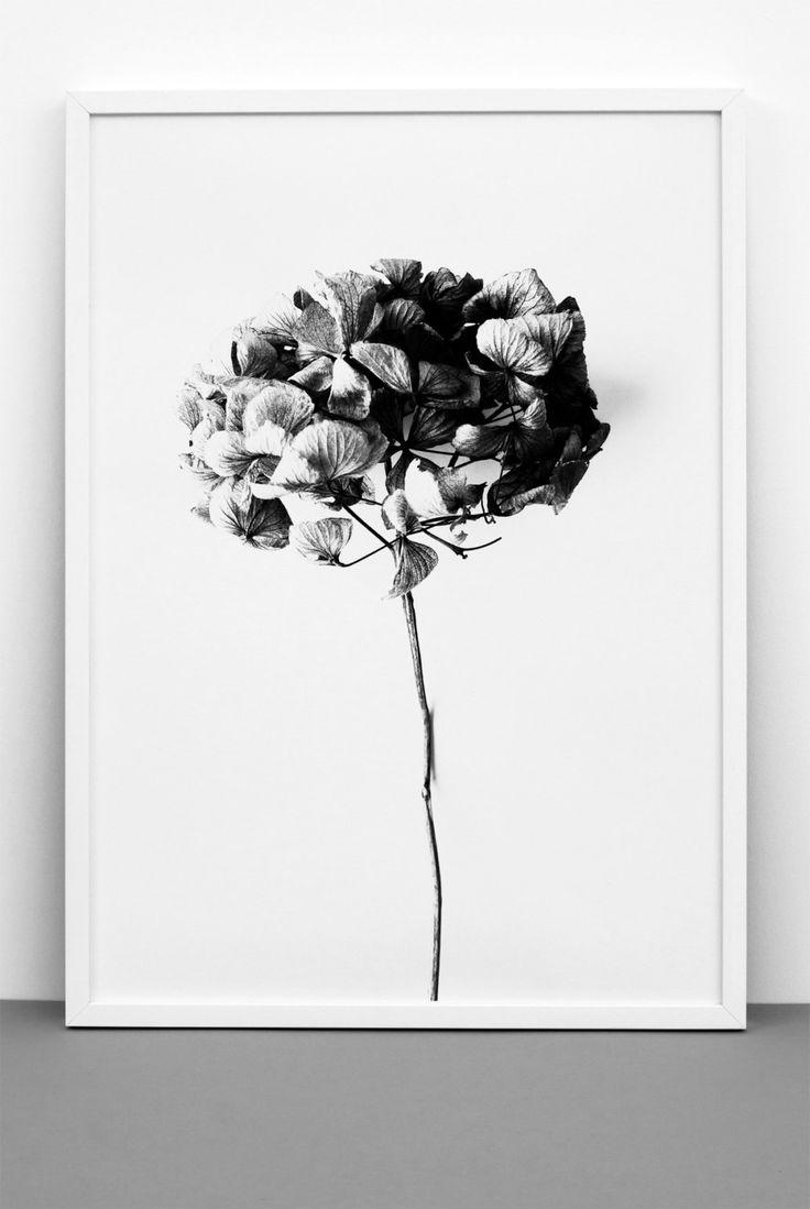 Plant hydrangea print , Black & white art, Romantic poster, Scandinavian, Photographic art, Wedding, Anniversary by Onemustdash on Etsy
