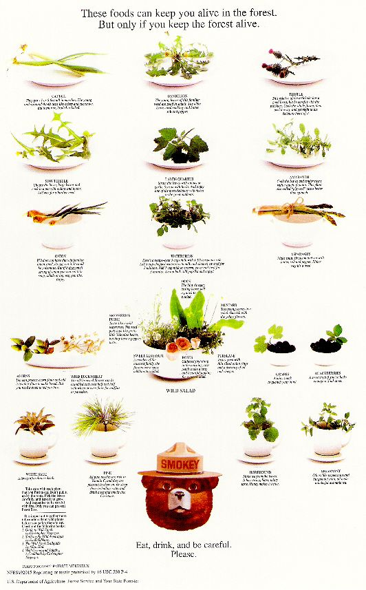 A Collection Of Smokey Bear's Best Nature Posters: Smokey Bear's Wild Edible Plants Poster