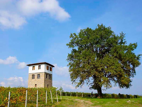 Kir-Yianni Winery | Imathia Prefecture |