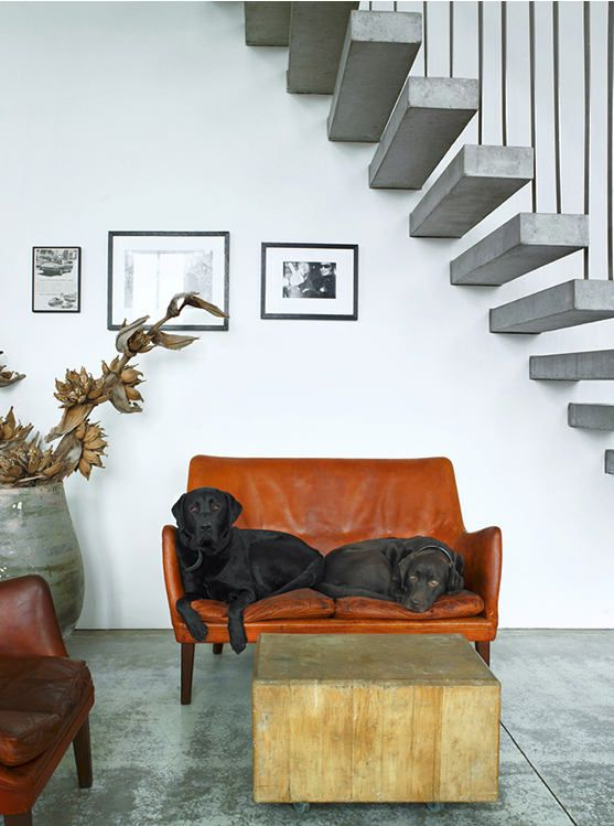 .: Floating Stairs, Couch, Dogs, Interiors, Puppys, Woods Blocks, Loveseats, Concrete Floors, Black Labs