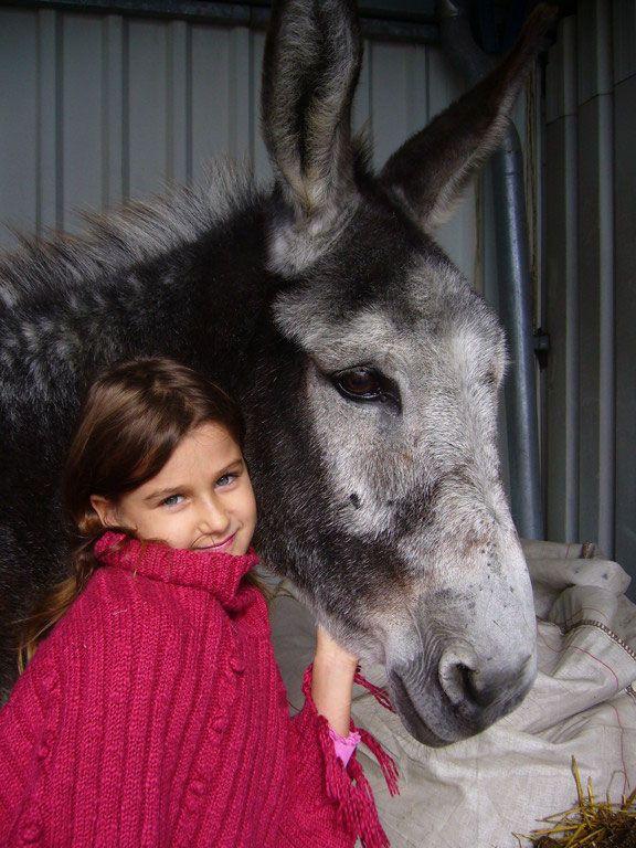 Zu Kindern fühlen sich Esel besonders hingezogen. Da sie gerne im Mittelpunkt stehen finden sie dort genau die richtige Zuwendung. Kinder wollen in der Regel erst einmal nur Kuscheln und lieb haben. Oft steht das Reiten erst mal an zweiter stelle. Besonders für ängstlich Kinder und Erwachsene, die sich noch nicht an Ponys oder Pferde heran trauen, sind Esel eine geeignete Therapie solche Ängste ab zu bauen. Esel bewegen sich ruhig und sanft und je mehr sie gestreichelt werden um so schöner…