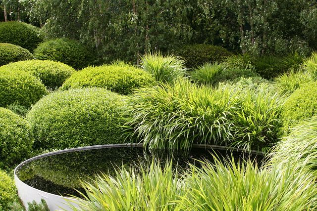 Stunning garden with Buxus, Acorus grass and birches at the back.  Irish Sky Garden, Chelsea Flower Show 2011 by sarahgardenvisit, via Flickr