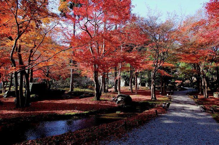 2011年12月の京都。しょうざん 庭園の紅葉です。訪れる人も少なく、ゆっくり過ごすことができました。2011年12月5日撮影 #京都 #紅葉 #京都好き #しょうざん #kyotojapan #kyotophoto