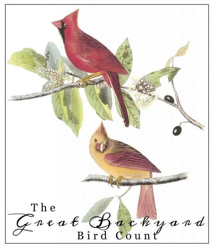 The Great Backyard Bird Count | Great backyard bird count ...