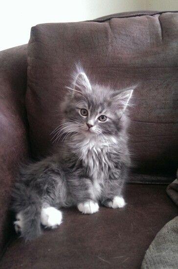 Atticus - such a pretty kitty❤️
