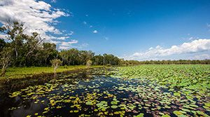 Gungarre Walk, Kakadu National Park