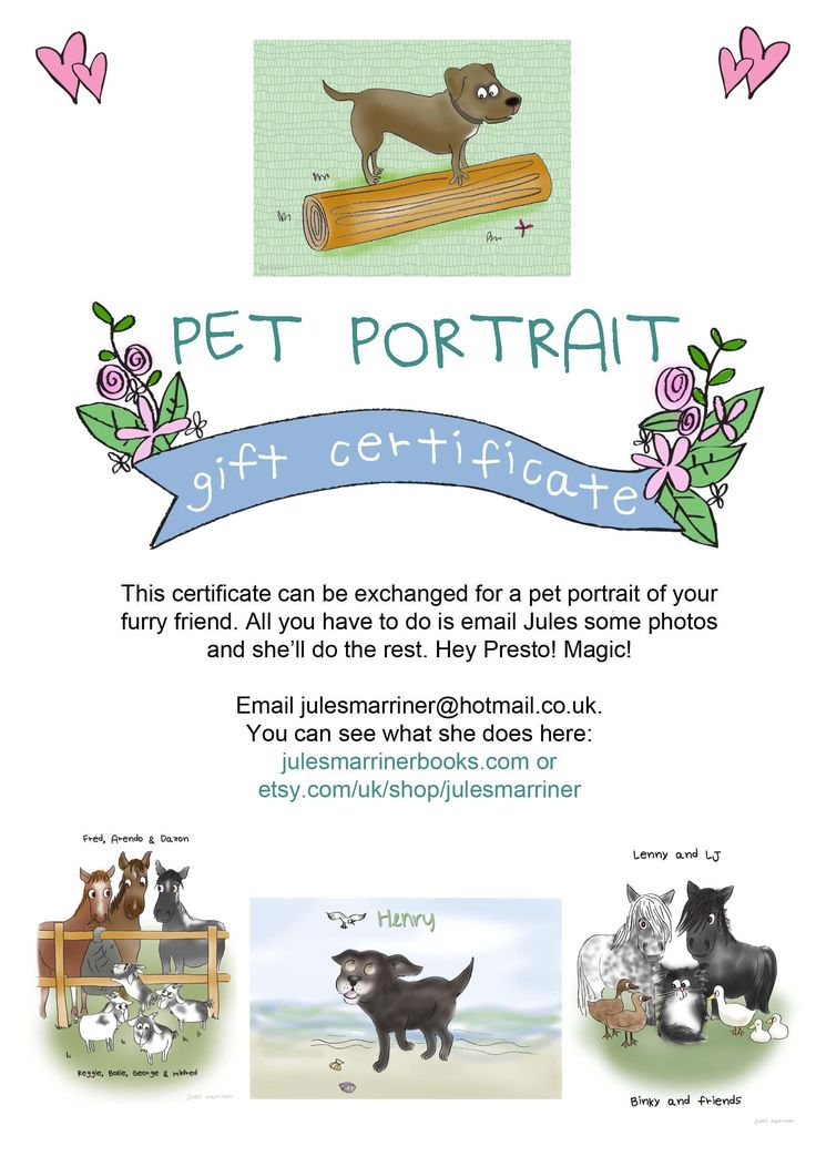 Pet Portrait GIFT CERTIFICATE, gift for friends, mad cat lady, dogs, horses, goats, rabbits, illustrations, caricature.