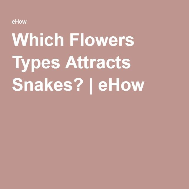 Which Flowers Types Attracts Snakes? | eHow