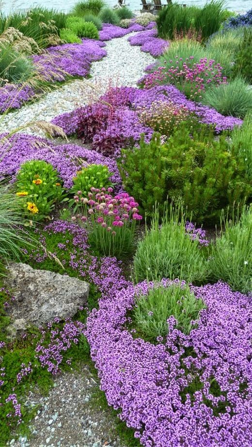 220 best images about groundcover ideas on pinterest for Low growing landscape plants