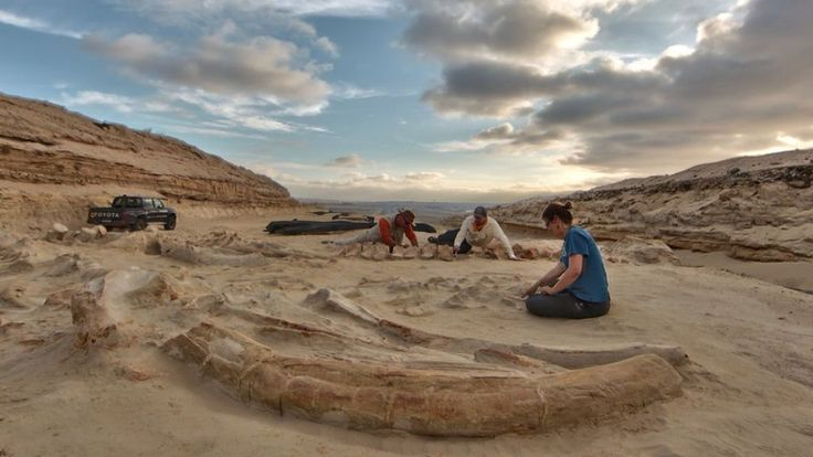 Chile's stunning fossil whale graveyard explained - BBC News
