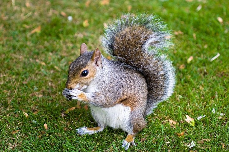 Haiku: Lessons from the Squirrel
