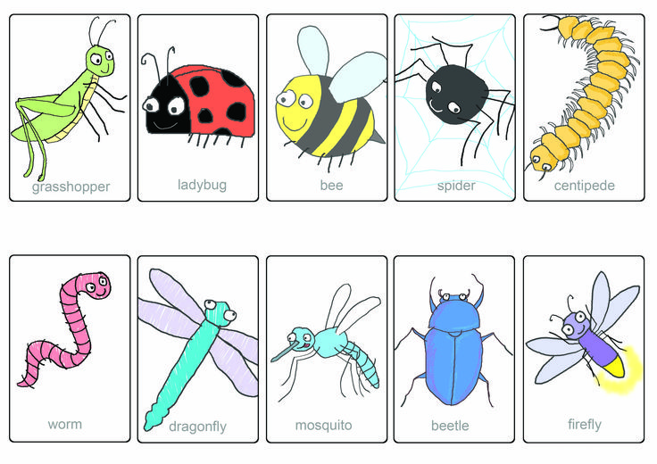 insects and bugs names - Google Search