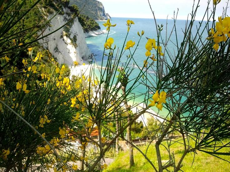 Dalla Spiaggia del Frate, in primo piano una ginestra gialla che colora la parete rocciosa nello sfondo. #numana #conero #rivieradelconero #tourism #marche #italy #beaches