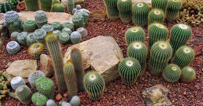 Oltre 25 fantastiche idee su giardino di piante grasse su - Cactus da interno ...