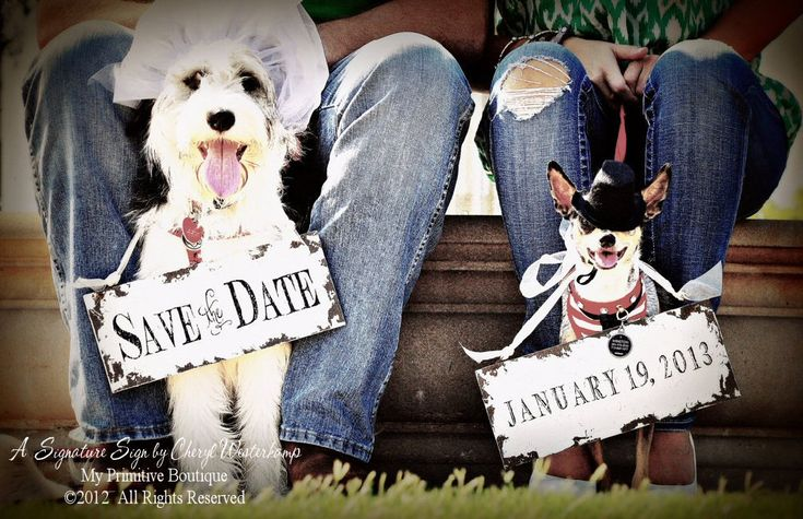 SAVE the DATE Sign Set for the DOGS , Vintage Photography , Photo Props , Vintage Wedding Signs. $44.00, via Etsy.