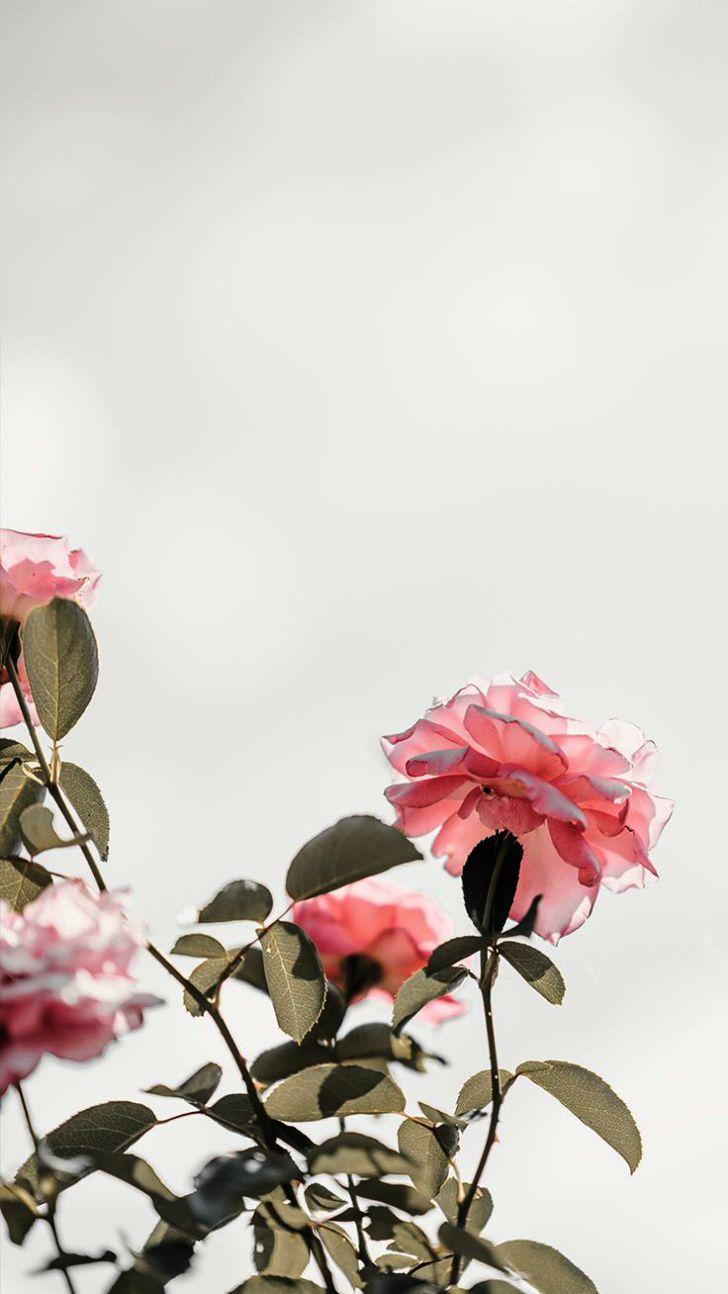 Live Wallpaper Iphone Xr Not Working Such Wallpaper Iphone X Border Versus Ipad Gadgets F Pretty Wallpaper Iphone Floral Wallpaper Iphone Pink Wallpaper Iphone