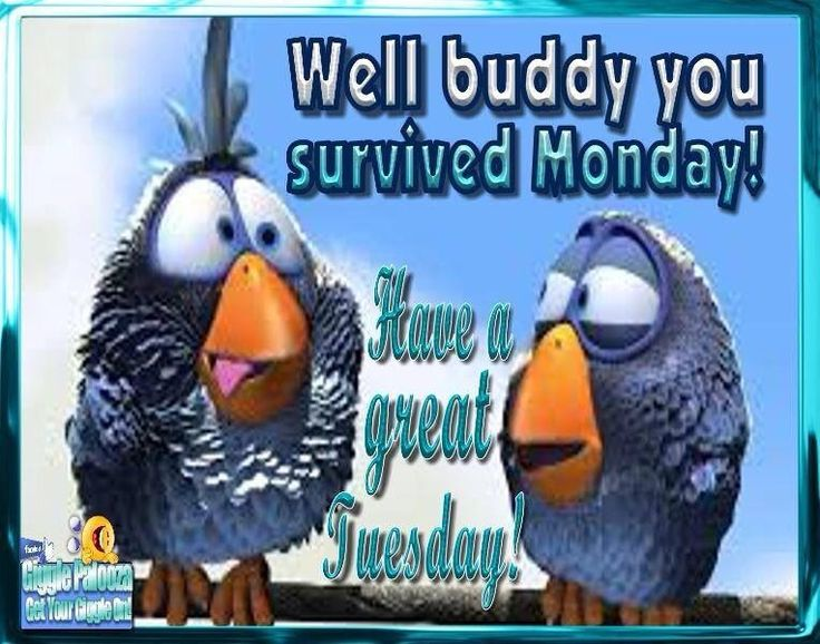 You Survived Monday Have A Great Tuesday tuesday tuesday quotes happy tuesday…