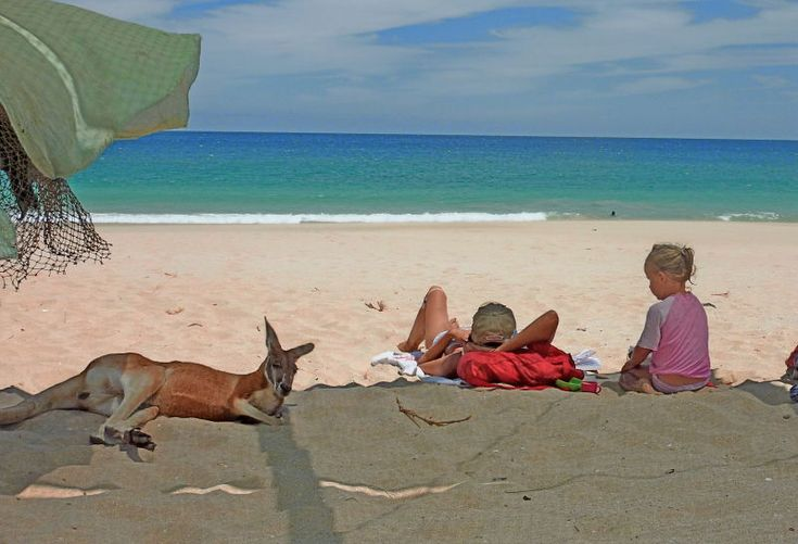 Australian beaches...