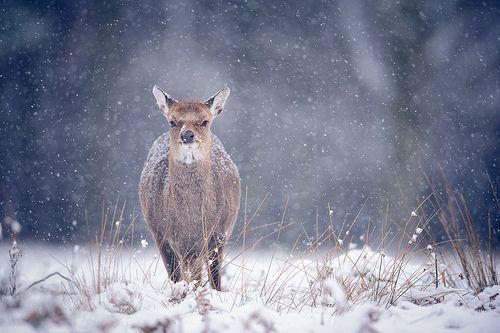 brr, it's winter!