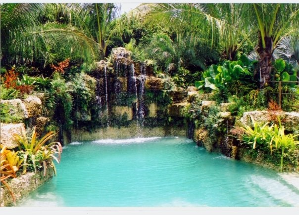 Backyard Jungle Tropical Landscapes : My landscaper is incredible Here is some of their portfolio Jungle B