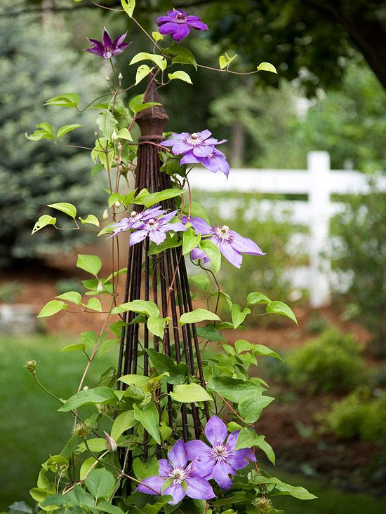 Tower of climbing purple vines.: Gardens Ideas, Clematis Gardens Interiors, Small Yard, Towers, Small Backyard, Flower Vines, Beautiful Gardens, Clematis Climbing, Clematis Vines