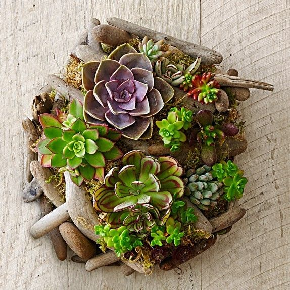 superb wall plant holders. Today  we will present you a superb collection of Unique Succulent Driftwood Planters That You Will Love 1248 best Endless Ideas images on Pinterest Succulents