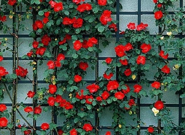 98 best images about am nagement de l 39 espace on pinterest garden borders planters and walkways. Black Bedroom Furniture Sets. Home Design Ideas